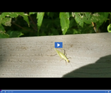 Phenomenon: Insect Patterns