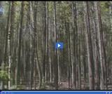 Geography of Utah. Climate, Soil, and Vegetation of Utah. Lodgepole pine trees.