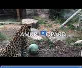 Patterns in Adaptations 2.2.1 - Animal Observations: Amur and Snow Leopards