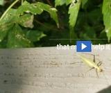 Phenomenon: Insect Adaptations