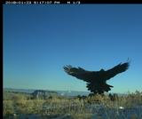BIO.1.5: Eagle Cam Data - Group 2