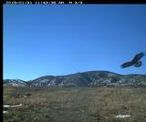 BIO.1.5: Eagle Cam Data - Group 4