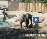 Phenomenon: Elephant Dirt Bath