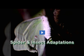 Backyard Bugs and Other Arthropods: Spider and Insect Adaptations