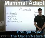 Ogden Nature Center: Adaptations - Mammals