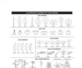 Ogden Nature Center: Leaf Identification Page
