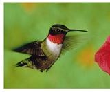 How Birds Move