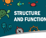 Structure and Function Lesson Plan 4.1.1