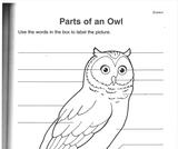 Ogden Nature Center: Parts of an Owl Worksheet