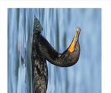 Ogden Nature Center: Bird Breakfast Cafe Images of Birds