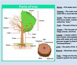 Ogden Nature Center: Parts of a Tree Slide