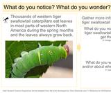8.3.1 Leaf Caterpillar Leaf