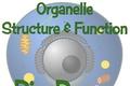 Organelle Bio Poem Lesson Plan